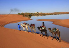 Travel in the dunes with camels